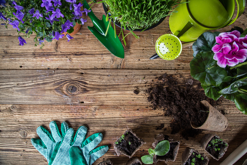 Applications pour se mettre au jardinage