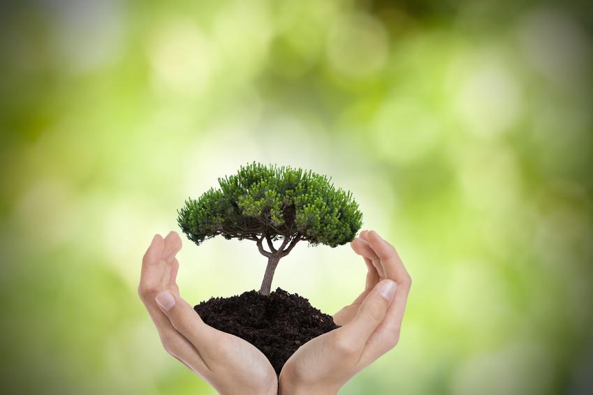 Journée mondiale de l'environnement : 4 applications Android pour sauvegarder l'environnement